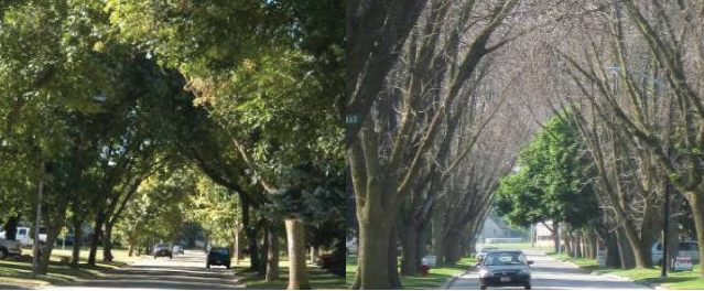 EAB before and after
