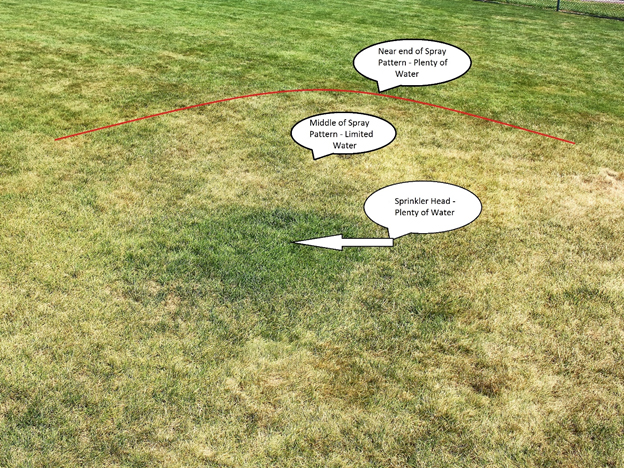 How To Water A Lawn | Fairway Green Inc