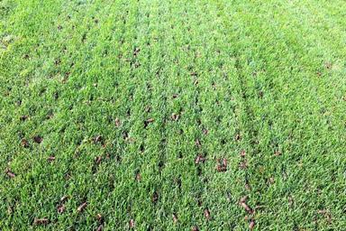 Lawn Aeration Seeding Articles