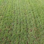 Benefits of Core Aeration and Over Seeding