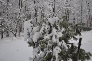 protecting plants during winter