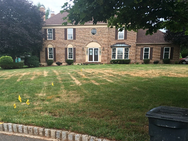 lawn affected by Ascochyta Leaf Blight