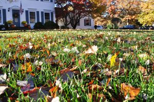 fall leaves on a lawn